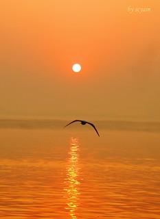 river Ganga,India_3
