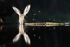 La constellation du livre (Emmanuelle2Aime2Ailes) Tags: animal livre eau reflet inthewild