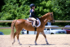 2016-06-19 (45) Black-Eyed Susan Horse Show - Upper Marlboro - Maryland - Caroline (JLeeFleenor) Tags: photos photography md maryland uppermarlboro pgcountyequestriancenter blackeyedsusan series blackeyedsusanseries horses pony ponies equine equestrian girls woman femme frau vrouw donna mujer dona    ena kvinde nainen   n  wanita   kvinne  kobieta mulher  kvinna  kadn  youth youthactivities youthsports