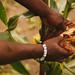 Farmer Showcasing Maize in a Crop Field
