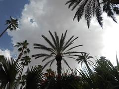 DSCN2682 (dbohaty) Tags: jardin majorelle morocco almaghrib