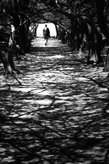 Into the roots (Thomas Demeulemeester) Tags: dem alone bn bw blackwandwhite blancetnoir heat man rodos shadows silhouette trees tunnel arbres blur canon600d chaleur chemin day ef50mmf18ii flou homme journe juillet july light lumire ombres path racines roots solitude summer t