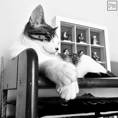 Olympic rest (Pedro Nogueira Photography) Tags: pedronogueiraphotography pedronogueira photography animal cat gato domstico domestic kitty kittens pets pet mobilephone iphone5 telemvel iphoneography patuska