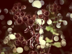 2016-08-29_20-31-33 (torstenbehrens) Tags: nature bokeh olympus ep5 m45mm f18 digital camera