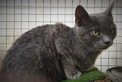 Protectora de Cabrils (animalsdelmaresme) Tags: animals maresme protectora cabrils gos gat gatera refugi adopta