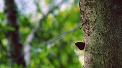 Harmony. (Jukai The Pilgrim) Tags: sony a6000 ilce6000 selp18105g harmony peaceful leisure colors green brown tree plants butterfly nature national naturaleza world hongkong landscape wild wildlife summer forest tates cairn outdoor sunlight country hiking cinematic