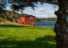 THE SHED BENEATH THE BRANCHES (Wade.J.) Tags: shed red ocean beach harbour field green blue bay tree fir branch branches cloud cloudy clouds cliff rock hill town