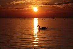 Sonnenuntergang (kaistaudinger) Tags: sonne wasser workum makkum holland niederlande meer boot dunkel nacht abend abendrot canon 700d wetter schwan schn strand nordsee
