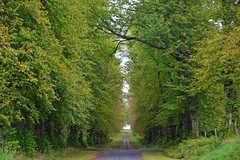 (Zak355) Tags: rothesay isleofbute bute scotland scottish trees limetreeavenue mountstuart