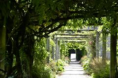 Florence Court, N Ireland (lesya2014) Tags: pergola wisteria