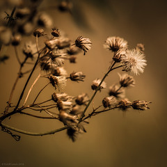 (rich lewis) Tags: macro macrophotography nature seed plant richlewis