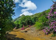 Koko Crater Botanical Garden (Oliver Leveritt) Tags: nikond7100 afsdxvrnikkor18200mmf3556gifed oliverleverittphotography hawaii oahu kokocraterbotanicalgarden nature dirt trail mountain flowers bougainvillea blooms