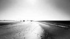 the beach (lichtflow.de) Tags: canon eos5dmarkiii nordsee nordstrand urlaub ef1635mmf4 bw sw schwarzweis beach strand meer sea sonne sand sun spo