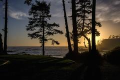 Sonnenuntergang am Pazifik (blichb) Tags: 2016 britishcolumbia kanada sonya7rii ucluelet vacouverisland zeissloxia235 blichb sonnenuntergang baum pazifik meer