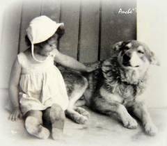 il mio primo amico (Anche*) Tags: cane ricordi amicizia anche aledio