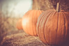 Pumpkins! (MMortAH) Tags: york autumn fall halloween pumpkin 50mm nikon yorkshire 14 north spooky explore horror getty maze patch nikkor themepark d90