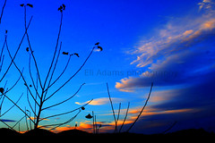 Sunset silhouette (Eli Adams Photography) Tags: blue autumn trees friends light sunset red orange sun white mountains fall beautiful field silhouette yellow night clouds digital canon dark season rebel xt evening solar leaf amazing colorful flickr pretty vermont shadows dof with pov farm tone hdr comments vt solor nture photomatix andatree hillstrees hueclouds