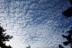 秋の訪れを感じるいわし雲の写真