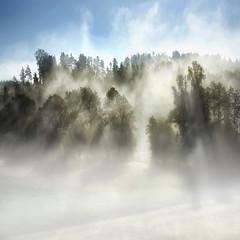 landscape - 0016 (helmet13) Tags: morning autumn trees mist nature sunshine fog forest landscape raw silence studies aoi 100faves peaceaward d700 heartaward platinumheartaward world100f platinumheartshalloffame platinumpeaceaward worldpeacehalloffame