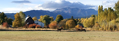 Barn, Horses, Mountains, Autumn (prwreden_98) Tags: autumn fall oregon or autumncolors allrightsreserved pinecreek copyrighted easternoregon bakercounty pinevalleyranch halfwayor philwreden powderrivercanyon prwreden halfwaymotel prwreden98