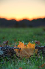 The Sun Sets on Autumn (djwtwo) Tags: sunset leaf nikon massachusetts photomatix millis d7000 afsdxvrzoomnikkor18200mmf3556gifedii oakgrovefarm