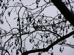 PICT0781 (ebvbaer) Tags: tiere vgel lhne