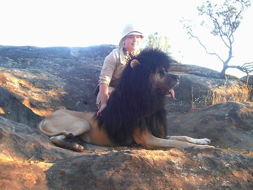 Dog Looks Like Lion! ROAR!!