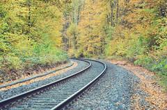 10 (Ruchiki) Tags: autumn trees colors forest herbst railway wald farben bumen kelkheim goldisch