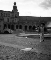 Sevilla Plaza de Espagna (doc-harvey) Tags: plaza bird de sevilla child kodak andalucia hasselblad 2012 espagna planar sonnar tx400 hwschlaefer docharvey