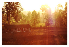 MORNING CHIME (Mohit K. Panchal) Tags: morning house mist tree home sunshine woods glow shadows jungle flare rays freshcolors villageside sweetmorning pleasantlandscape limolight
