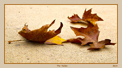 The Fallen (david.gill12) Tags: fall leaves