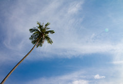 The growth of a palm tree (Ksung) Tags: blue vacation sky cloud white holiday tree green canon thailand eos palm growth krabi lightroom 1755 60d