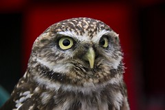 A serious bird