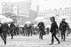 WINTER'S FIRST SNOWFALL (ajpscs) Tags: street winter bw blancoynegro japan japanese tokyo blackwhite nikon shibuya streetphotography monochromatic  nippon  blkwht grayscale  snowfall  fuyu d300  seasonchange scramblecrossing  monokuro ajpscs  tokyo japan wintersfirstsnowfall