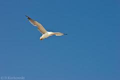Möwe (Twenty-Seven Photography) Tags: blue bird strand meer urlaub croatia katze blau möwe rovinj kroatien umag
