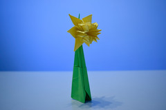 Daffodil (AG-Wolf) Tags: origami papiroflexia flor flower narciso blue azul papel paper adorno ornament