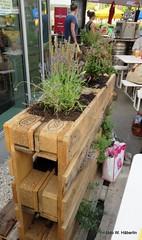 Begrünte Holzpaletten_8943 (urban-development) Tags: urban gardening stadtökologie lebensqualität wien