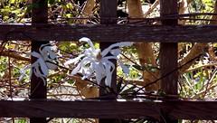 TriptoRoyalRoads01April2016(109) (gordhandford) Tags: royalroads colwood britishcolumbia 2016 spring