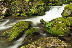 Hayedo de Montegrande (jlalvarezphotography_nature) Tags: asturias hayedo montegrande larga arroyo exposition long exposicion water waterfall forest spain espaa