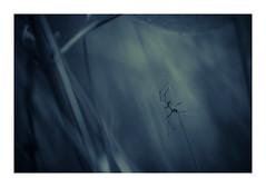 Deadly Summit (Naska Photographie) Tags: naska photographie photo photographe paysage proxy proxyphoto macro macrophotographie macrophoto araigne spider dark darkness extrieur night nuit sauvage eos canon sigma