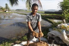 SBC_2015_31Aug_07 (susancorpuz90) Tags: zamboangadelsur cornharvest samal tukuran susancorpuz food foodsecurity