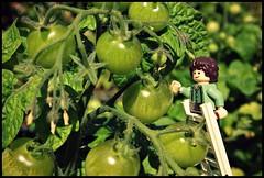 Checking the Crops (JamSponge1664) Tags: lego legophotography legofigure legohobbit legolordoftherings frodo hobbit lordoftherings