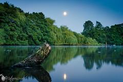 The moon over Elmdon park (Alex Matravers) Tags: night water moon longexposure sony a7 sonya7 kit lens birmingham pond reflections log green scenery