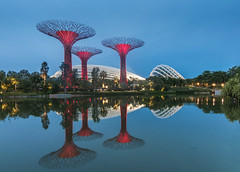 Supertrees V2.0 (RomeoJunior) Tags: supertree supertrees singapore longexposure nikond90 nikon nightphotography night nightimages nightshot blue hour travel travelphotography