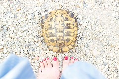 REMINISCENCIAS DE CASIOPEA (cristina or) Tags: cabodegata almeria vacaciones holiday summer verano tortuga tortoise selfie selfportrait pies feets casiopea momo