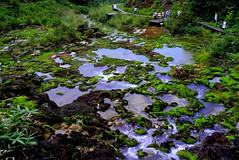 Chatsubomigoke Park (tez-guitar) Tags: stream fall water moss mountain highland park gunma leicax1 leica
