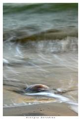 medusa arenata2 (Giorgio Serodine) Tags: medusa mare acqua schiuma mosso canon tele allaperto sabbia brussa caorle