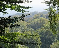 IMG_5243 (jaglazier) Tags: 2016 91416 bielefeld copyright2016jamesaglazier deciduoustrees germany hills september teutoburg teutoburgforest teutoburgerwald trees landscapes mountains parks nordrheinwestfalen