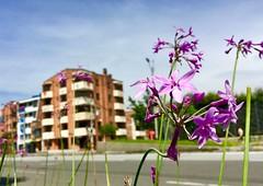 simbiosis (HSOBERON) Tags: simbiosis suburbia suburbio ciudad iphonese sky envigado city flowers flores iphone endor hernnsoberon hsoberon