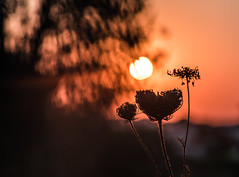 late orange makes a new black (Just Ron ;)) Tags: sunset bokeh tokina silhouette orange nikon d750 imageron nature outdoors